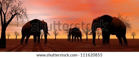 Shadows of three elephants standing between baobabs in the savannah by sunset - stock photo