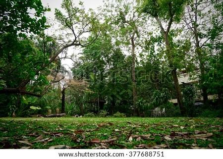 shady garden - stock photo