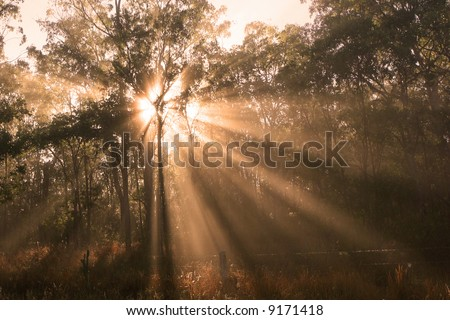 Shafts of Sunlight - stock photo
