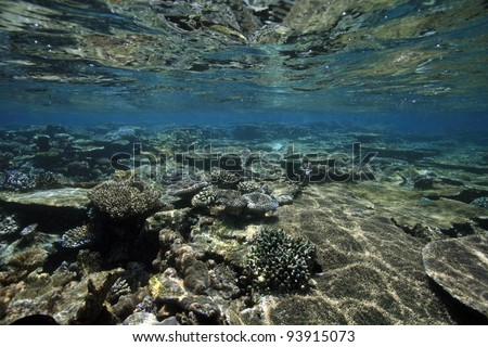Shallow coral reef in the indian ocean