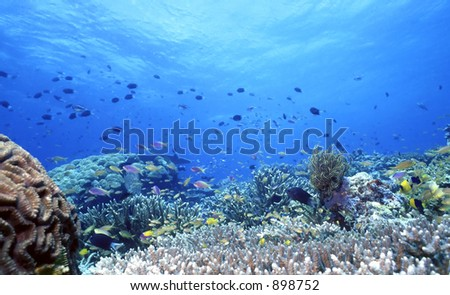 Shallow coral reef off of Uepi,Solomon Islands in the South Pacific - stock photo
