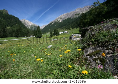 Shallow depth of field - focus on flowers. Lechtal Alps, Tirol, Austria.