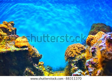Shallow underwater without fishes - stock photo