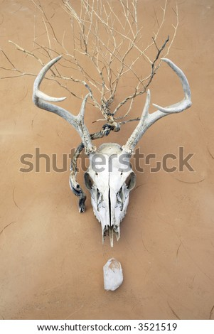 Shamanic animal, vegetable, and mineral. Deer skull, plant skeleton, and crystal on adobe surface. - stock photo