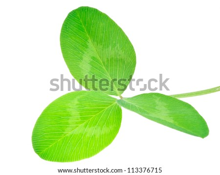 Shamrock isolated on a white background. The concept - good luck, put sacred Patrick. - stock photo