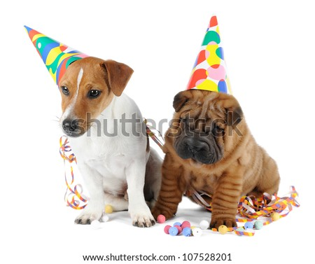 Shar pei and Jack Russel Terrier puppies in studio on white background
