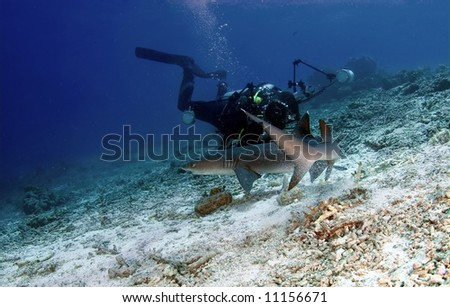 Shark and diver at ocean