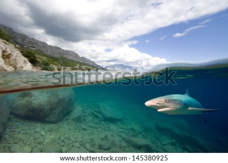 Shark and rocky seaboard - stock photo