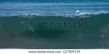 Shark attack simulation - stock photo