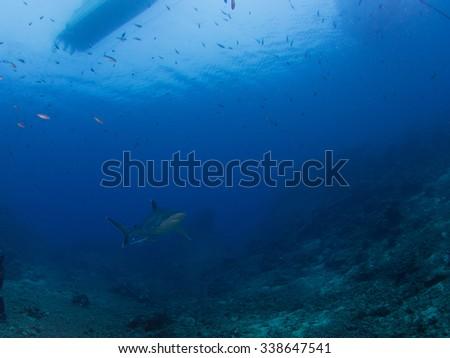 Shark & Boat  - stock photo