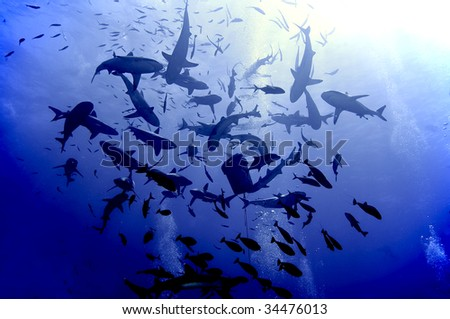 Shark feeding frenzy.