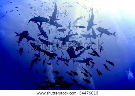 Shark feeding frenzy. - stock photo