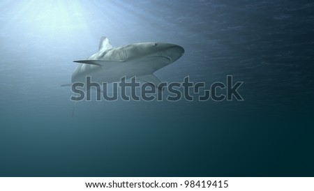 shark in ocean waters - stock photo