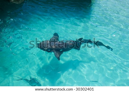 Shark in surface of water