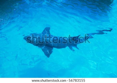 Shark in surface of water - stock photo