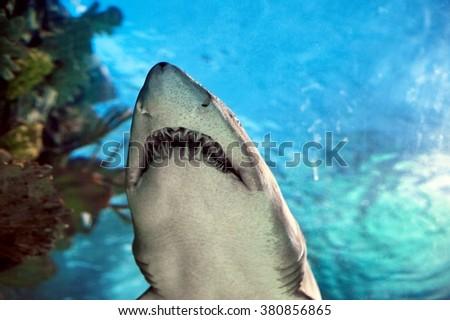 Shark in the aquarium - stock photo