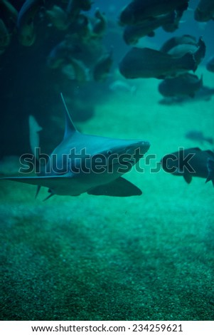 Shark in the depths of the sea. - stock photo