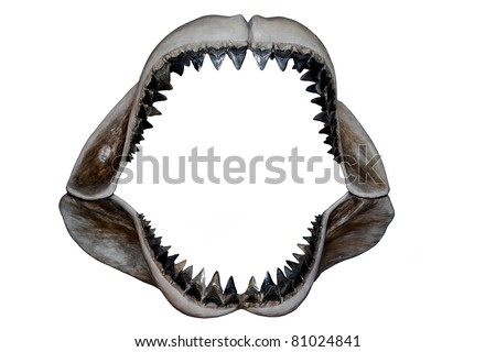 how to draw shark teeth