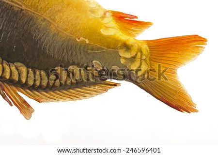 Shark's fin on a white background - stock photo