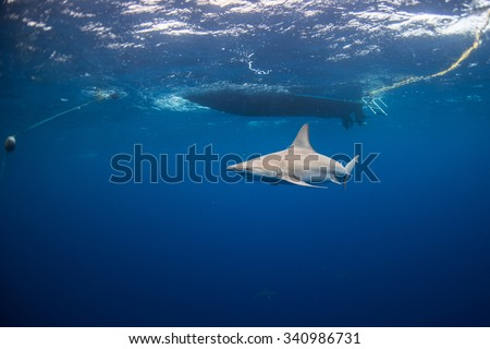 Shark swimming under boat