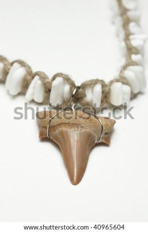 shark tooth - stock photo