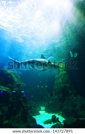 Shark underwater swimming over coral reef - stock photo