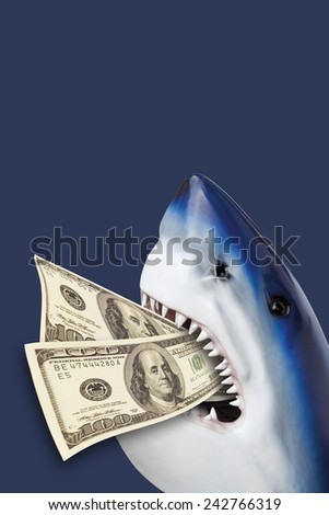 Shark with 100 USD in mouth. - stock photo