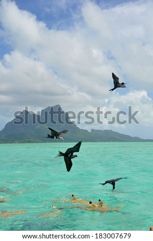 Sharks an birds in the lagoon of Bora Bora, French Polynesia - stock photo