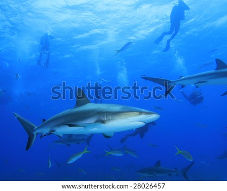 Sharks and Divers - stock photo