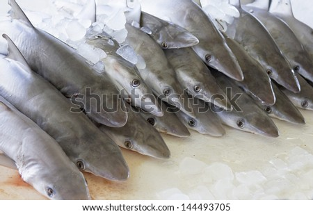 sharks in fish market of Fujairah (Unites Arab Emirates)