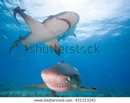 Sharks in the clean sea water  - stock photo