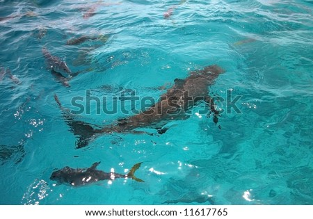 Sharks swimming in turquoise ocean water.  Blue hole, Belize - stock photo