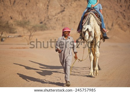 SHARM/EGYPT - 2012 MAY 30: bedouin leads camel with tourist - stock photo