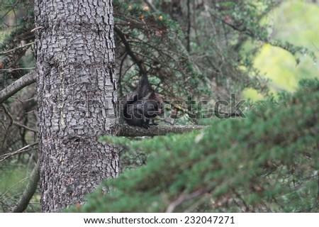 sharp-eared squirrel in park of Sochi, Krasnodar krai, Russia - stock photo