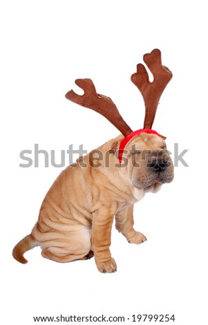 sharpei dog weaing antler