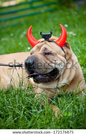 sharpei dog wearing  devil horn - stock photo