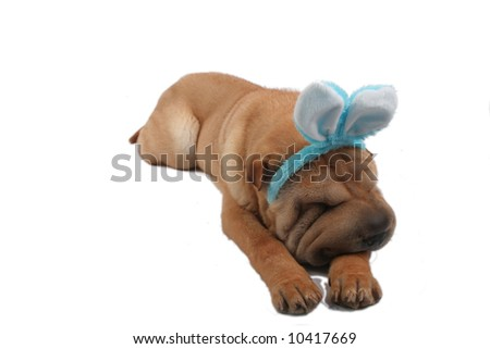 sharpei dog wearing rabbit ears