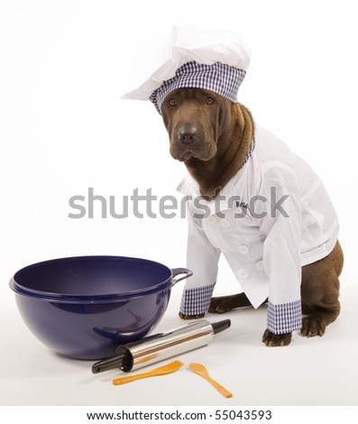 Sharpei in chef outfit with cooking tools on white background - stock photo
