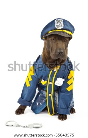 Sharpei in play policeman outfit on white background