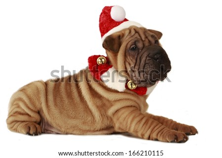 Sharpei puppy christmas