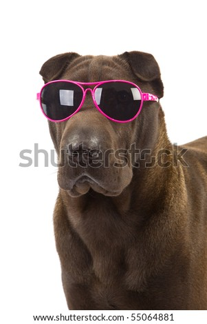 Sharpei with pink sunglasses on white background