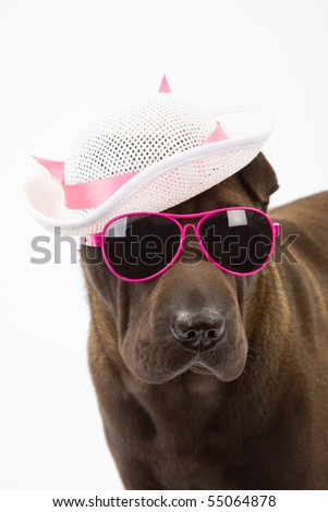Sharpei with white hat and sunglasses on white background - stock photo