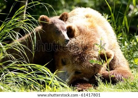 She-bear and bear cubs. - stock photo