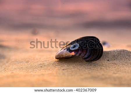 She sells sea shells by the sea shore. Resting in this serene beach and watching the beautiful sunset.  - stock photo