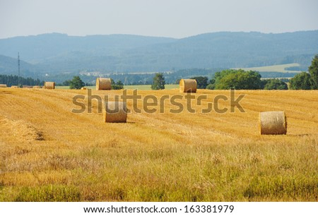 Sheaves in a field - stock photo