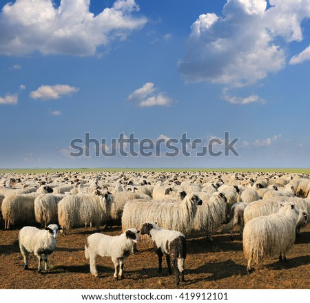 Sheep and lambs, landscape - stock photo