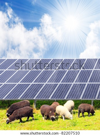 Sheep and solar energy panels against sunny sky.  Ecological farming metaphor. - stock photo