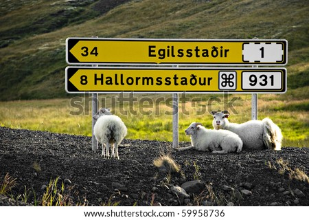 Sheep are resting under signpost in Iceland - stock photo