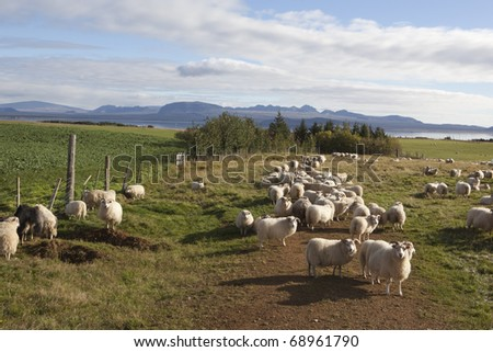 Sheep corral  Iceland - stock photo