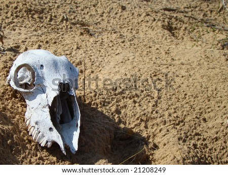 Sheep cranium lays on the sand in steppe